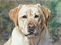 Yellow Labrador Retriever (Blossom)