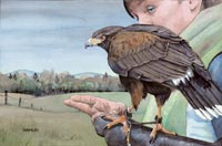 Harris's Hawk & Handler