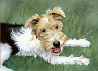 Wire-Haired Terrier Puppy (Scruffy)