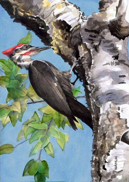 The Art Of Steve Hamlin Watercolors All Work Wildlife
